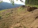 Forstarbeiten, Gehölzpflege